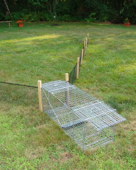 Diy Woodchuck Trap