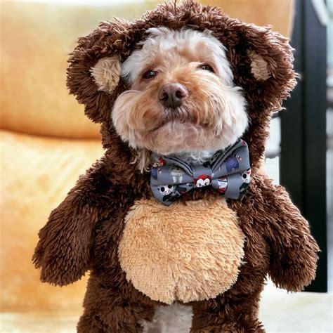 Diy-Bear-Costume-For-Dog