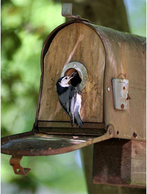 Diy-Birdhouse-Mailbox