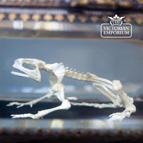 Diy-Box-For-Frog-Skeletal