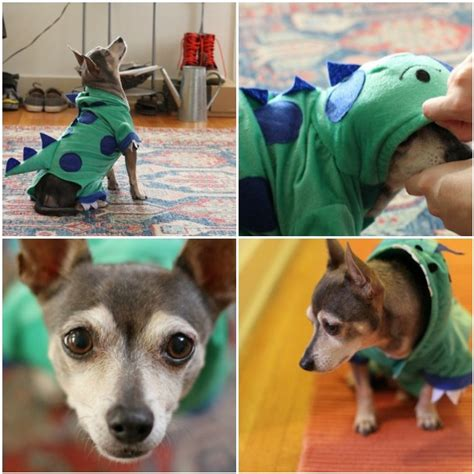 Diy-Dino-Dog-Costume
