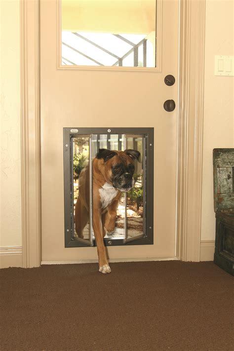 Diy-Dog-Door-Rottweiler