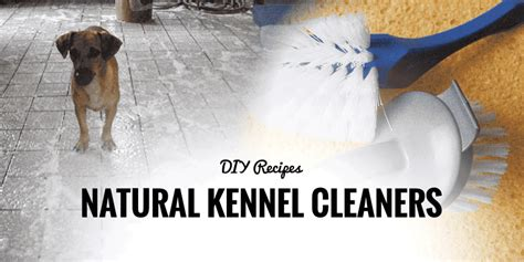 Diy-Dog-Kennel-Cleaner