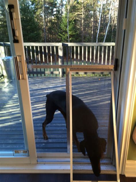 Diy-Doggie-Door-Screened-Porch