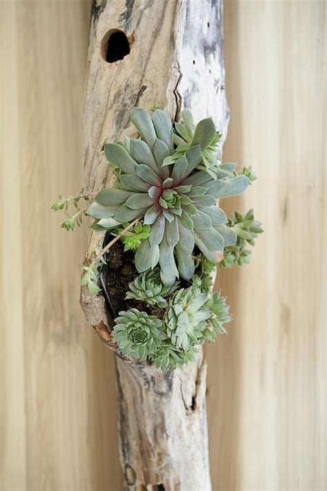 Diy-Driftwood-Succulent