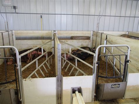 Diy-Farrowing-Crate