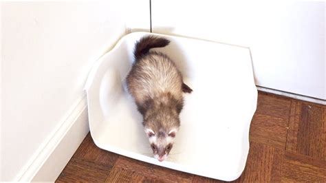 Diy-Ferret-Litter-Box