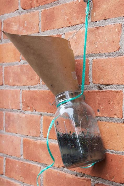 Diy-Fly-Trap-For-Chicken-Coop