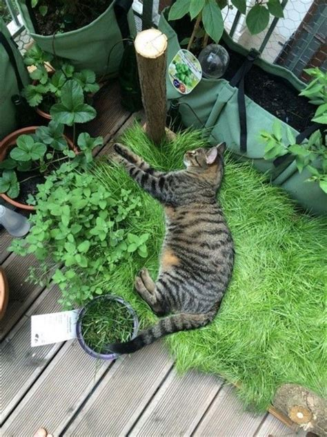 Diy-Grass-Box-For-Cats