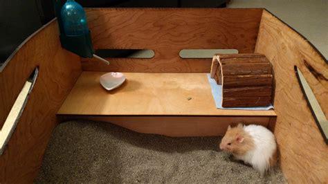 Diy-Hamster-Sandbox