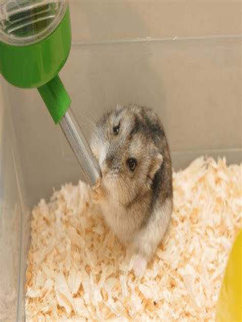Diy-Hamster-Wood-Bends