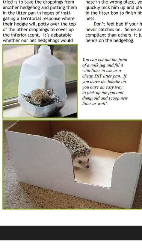 Diy-Hedgehog-Litter-Box