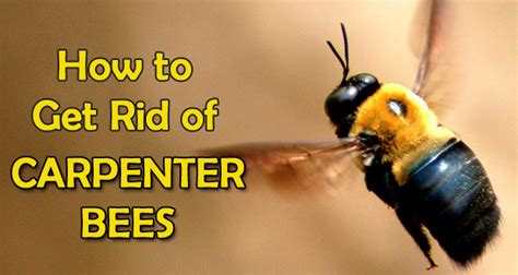 Diy-How-To-Get-Rid-Of-Wood-Bees
