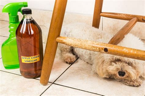 Diy-Keep-Dog-From-Chewing-On-Furniture