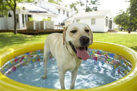 Diy-Keeping-Dog-House-Cool-In-Summer