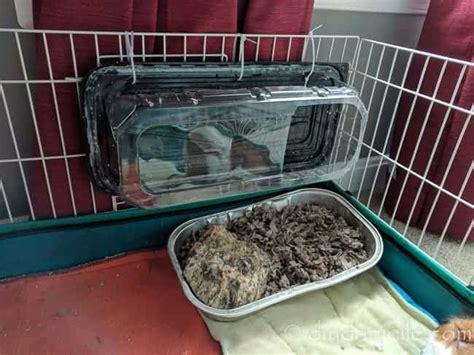 Diy-Litter-Box-For-Guinea-Pigs