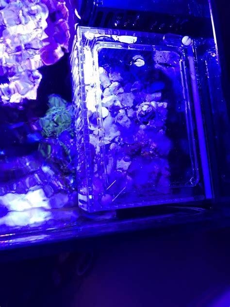 Diy-Mushroom-Box-Reef-Tank