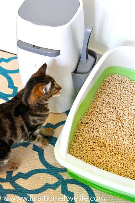 Diy-No-Smell-Litter-Box
