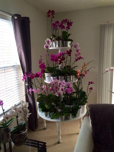 Diy-Orchid-Rack