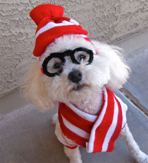 Diy-Pet-Halloween-Costumes