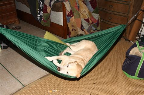 Diy-Pet-Hammock