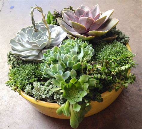 Diy-Pots-For-Succulents