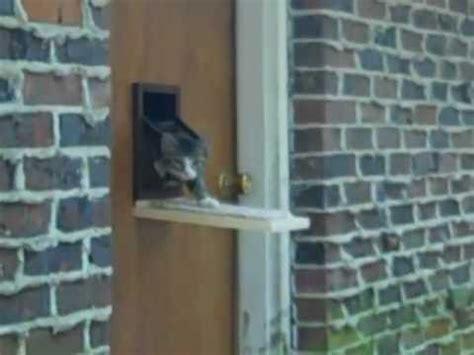 Diy-Raccoon-Proof-Cat-Door