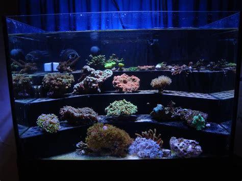 Diy-Reef-Rack