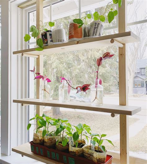 Diy-Seed-Starting-Shelf-Small-Spaces