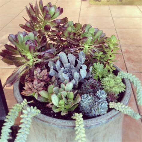 Diy-Succulent-Pot