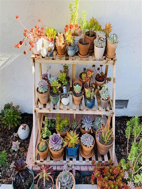 Diy-Succulent-Shelf