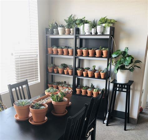 Diy-Succulent-Shelves-With-Lights
