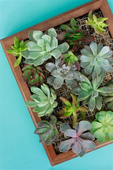 Diy-Succulent-Wall-Planter