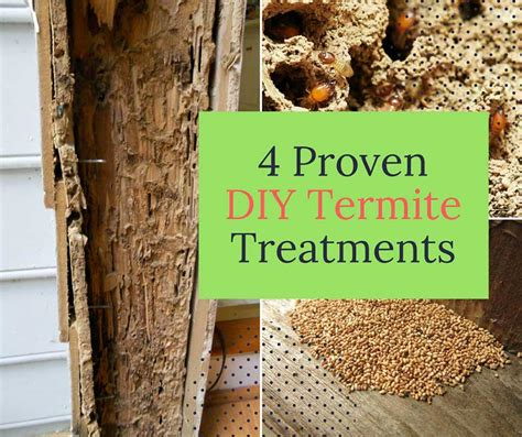 Diy-Termite-Wood-Treatment