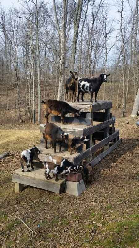 Diy-Toys-For-Goats