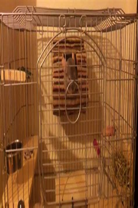Diy-Wooden-Chinchilla-Shelves