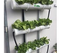 Best Diy hydroponics system plans.aspx