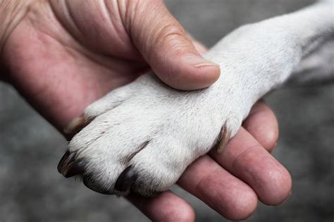 Do as i do dog training.aspx Image