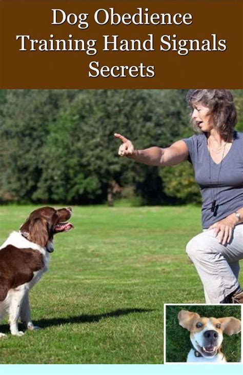 Do it yourself dog obedience training.aspx Image