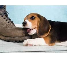 Best Do all puppies bite