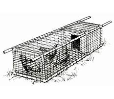 Best Do it yourself chicken coops.aspx