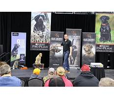 Best Do it yourself dog obedience training.aspx