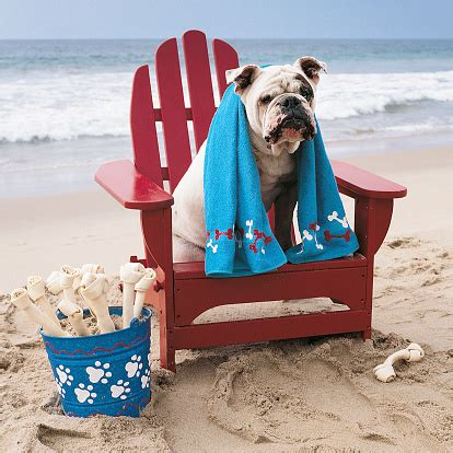 Dog In Adirondack Chair On Beach
