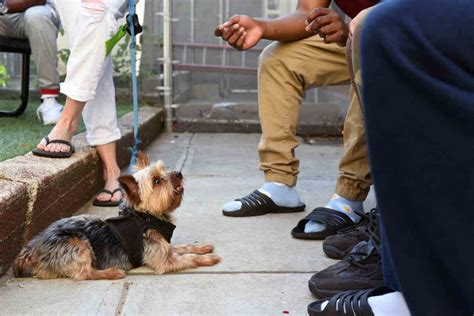 Dog obedience training brooklyn crown heights.aspx Image