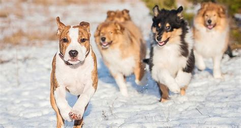 Dog pack behavior training.aspx Image