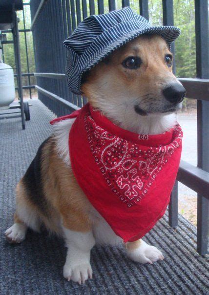 Dog train conductor outfit Image