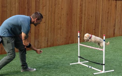 Dog training in dhanbad Image