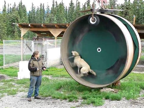 Dog-Running-Wheel-Plans