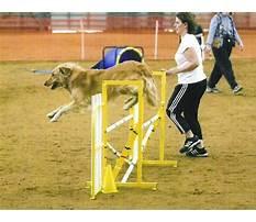 Best Dog agility training dfw