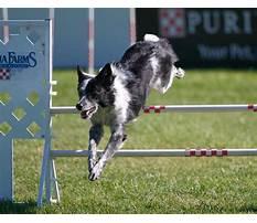 Best Dog agility training georgia.aspx